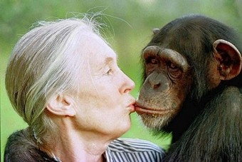 Jane Goodall kissing a chimpanzee on the mouth.