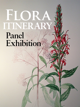 Widget image linking to itinerary of the travelling Flora exhibition